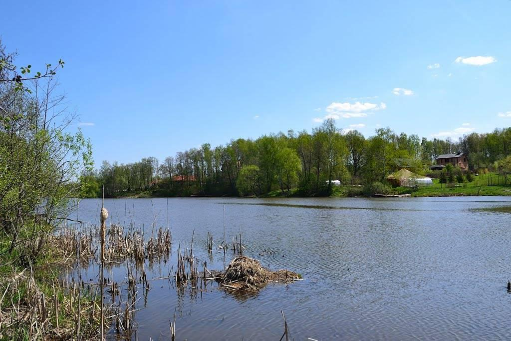 платная рыбалка в чеховской области
