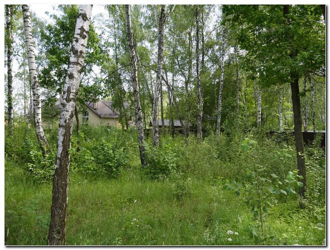 Великолепный участок для дома ! Подходит для постоянного проживания, 6200000 руб.