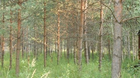 Продаётся земельный участок 8 соток с лесными деревьями