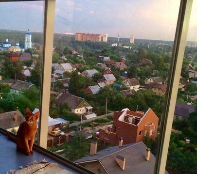 2-к квартира, Щёлково, Финский, 11
