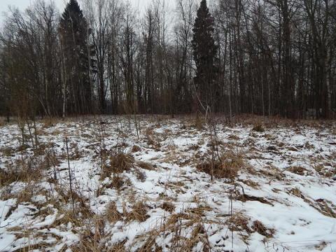 При лесной участок 35 соток в д.Староникольское