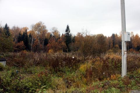 Прилесной участок в СНТ, окруженном с четырех сторон грибным лесом