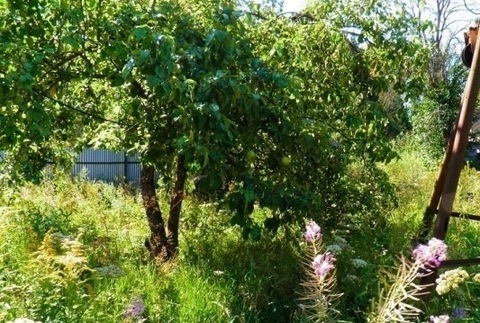 Дача в Солнечногорском районе