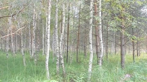 Продаётся земельный участок 24 сотки с лесными деревьями