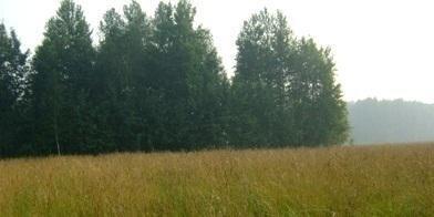 Продается земля 3,85 Га для производства сельхозпродукции