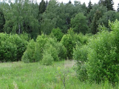Земельный участок Дмитровское шоссе около воды с лесными деревьями