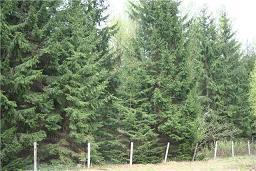 Продается лесной участок, Минское - Можайское шоссе, район Голицыно