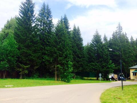 Лесной участок с соснами. 15 соток 6,5млн