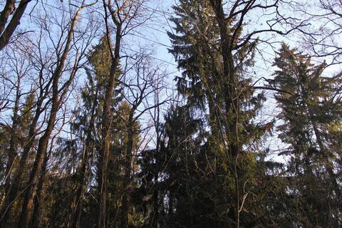 Лесной участок 15 сот в Стародачном посёлке на Рублевке по низкой цене