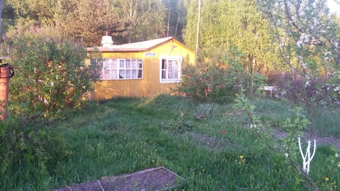 Дом в окружении соснового леса