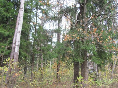 Лесной участок 25 соток возможно увеличение до 45