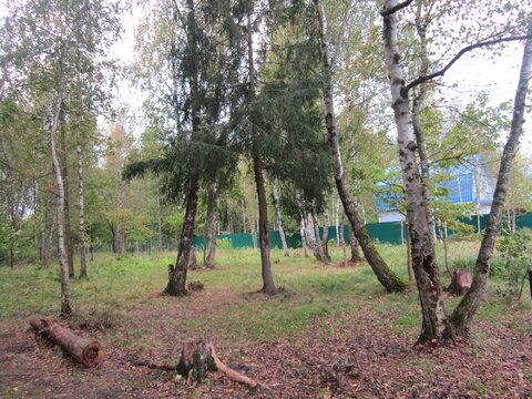 Продаются 2 земельных участка пос. Лесной Пушкинский р-н