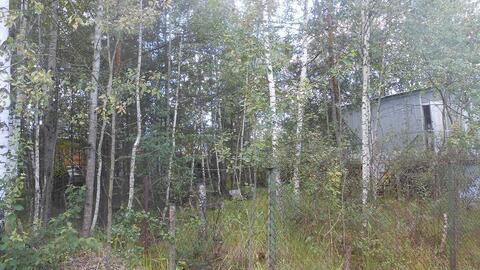 Продаётся земельный участок с лесными деревьями