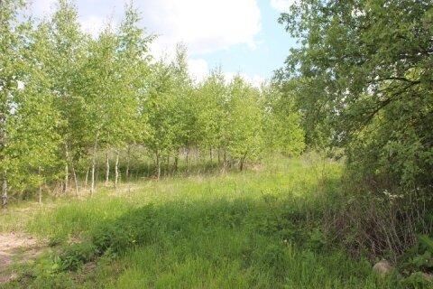 В деревне Вяземское продается садовый участок 12 соток.
