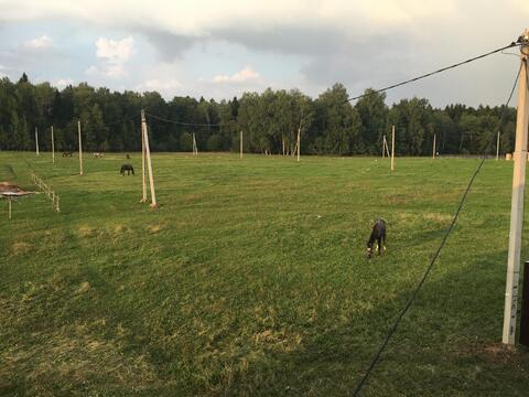 Участок в деревне Дулепово 6 соток