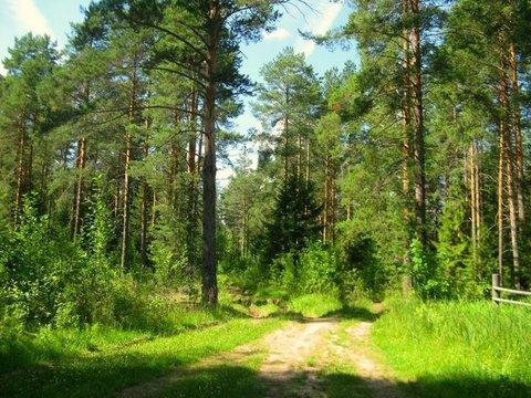 Лесной уч-к 1 Га в первозданной природе. 60 км от МКАД, Наро-Фоминск