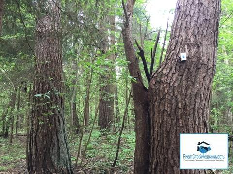 Лесной массив 27 Га с вековыми елями, соснами и березами в деревне
