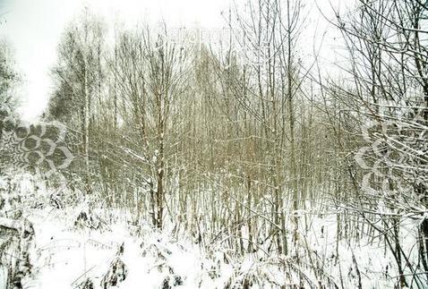 Минское ш, 100 км от МКАД, Лужки