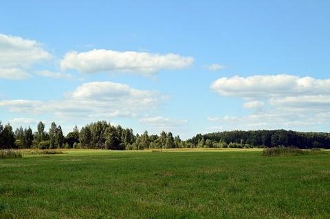 Земельный участок д. Максимиха, , ИЖС, 290500 руб.