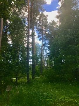 Продаю лесной участок. минское ш. 20км. Жаворонки