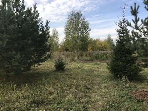 Продается земельный участок в окружении хвойного леса в д. Грибово