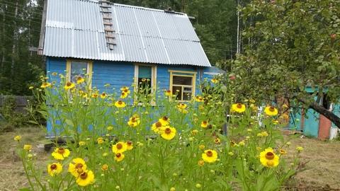 Уютный домик в сосновом лесу. 50 км от Москвы.