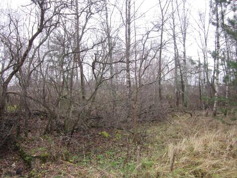 Продается лесной участок на западной стороне г. Пушкино, рядом Водопро
