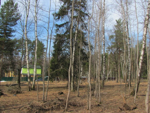 25 соток с лесными деревьями