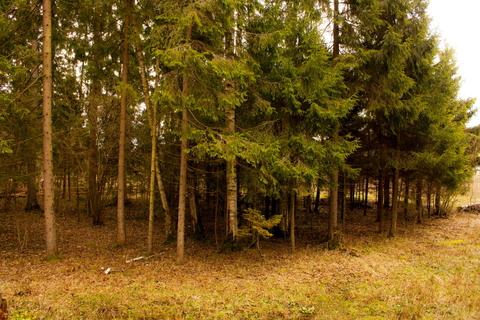 Земельный участок в лесу, 15 соток, 1,45 млн. рублей, Дмитровка