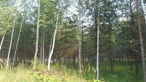 Продаётся земельный участок 16 соток с лесными деревьями