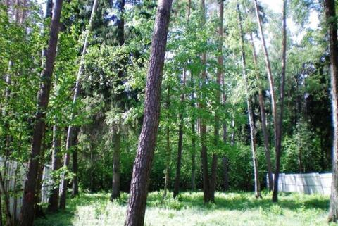 Лесной участок на Новорижском шоссе 10км. от МКАД со всеми ком-кациями