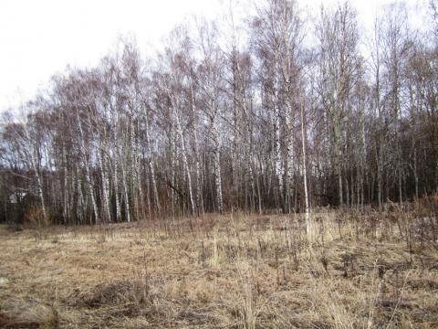 Участок 2,9 Га в д.Кончинино, Дмитровского района.