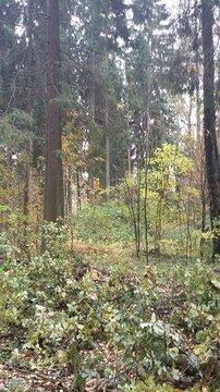 Продаю лесной земельный участок в прекрасном районе Подмосковья