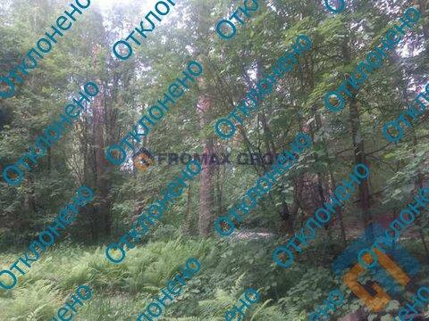 Продаётся земельный участок 11 соток с лесными деревьями близко от Мос