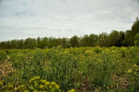 Земельный участок 17 соток в поселке «Пушкино Лайф»