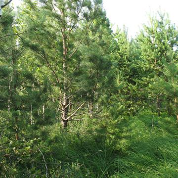 Продается участок, общей площадью 16 соток, в районе пос. Лесной.