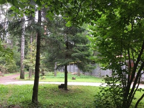 Эксклюзив 15 сот. с лесными деревьями, Ново-Александрово, 7 км от МКАД