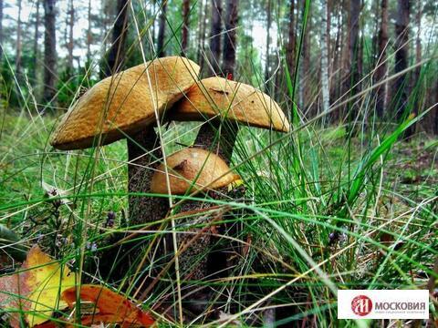 Лесной участок 15,37 сотки, ПМЖ, Новая Моква, 25 км. Калужское ш.