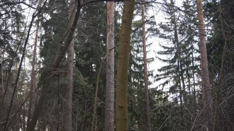 Лесной участок в Салтыковке