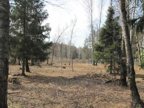 Участок с лесными деревьями в шаговой доступности электричка