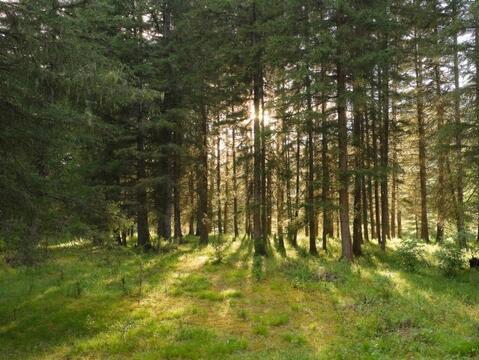 Домик в сказочном лесу. ш. Носовихинское, 50 км от МКАД