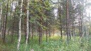 Продаётся земельный участок 24 сотки с лесными деревьями, 1350000 руб.