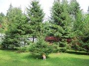 Большой участок 40 соток с лесными деревьями. Газ. Охрана., 6300000 руб.