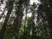 Лесной массив 27 Га с вековыми елями, соснами и березами в деревне, 5000000 руб.