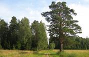Прилесной участок 11 соток, ПМЖ, Новая Москва, м. Саларьево, 4228224 руб.