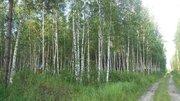 Продаётся земельный участок 8 соток с лесными деревьями, 450000 руб.