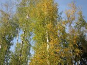 Красивый лесной участок 12 соток, Минское шоссе, Зелёная роща-1, 2950000 руб.