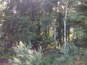 Участок с лесными деревьями 6 соток в с. Талеж, 950000 руб.