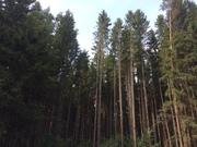Земельный участок, 10 сот, ПМЖ г. Москва, Варшавское ш, 28 км от МКАД, 1800000 руб.