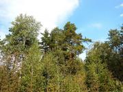 Сказочный сосновый лес и великолепное озеро, участок 8 соток, 50 км., 650000 руб.